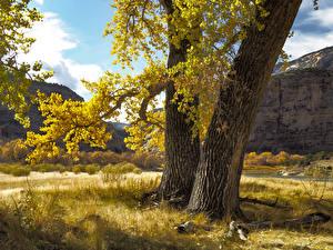 Фото Осень Трава Ствол дерева Ветки Природа