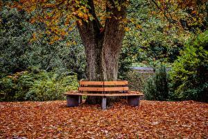 Обои для рабочего стола Осень Парк Скамейка Лист Ствол дерева Природа