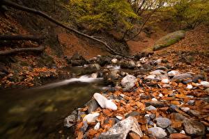 Фото Осенние Камень Ручеек Листва Природа