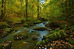 Обои Осенние Камень Ручеек Мха Листва