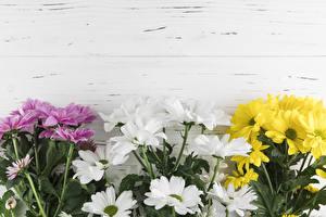 Обои Хризантемы Доски