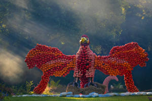 Картинки Креативные Тыква Птица Крылья Природа