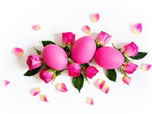 Фотографии Пасха Роза Белом фоне Яйца Розовых цветок
