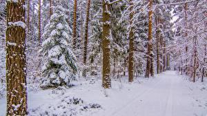 Фотографии Леса Зима Дороги Деревья Снега Природа