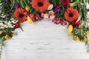Картинки Гербера Тюльпан Розы Альстрёмерия Доски Шаблон поздравительной открытки Цветы