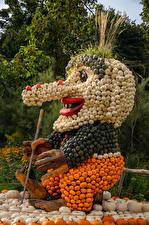 Картинка Германия Креативные Тыква Старик Дизайн Ludwigsburg Pumpkin Festival Природа