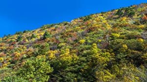 Фотография Япония Осенние Холмов Кусты Hakone Komagatake Ropeway