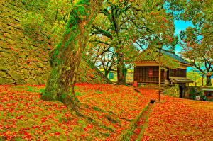 Фотография Япония Замки Осенние HDRI Деревья Листья Мха Kumamoto Castle