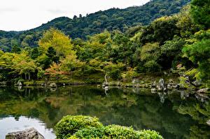 Картинки Япония Киото Парки Пруд Камни Дерево Природа