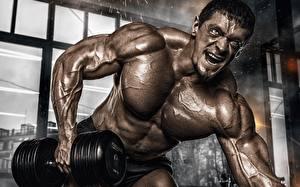 Картинка Мужчины Бодибилдинг Мышцы Тренируется Руки Гантеля