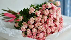 Фотографии Роза Букеты Розовая цветок