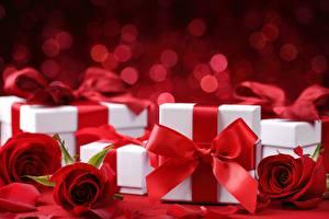 Фотографии Розы Коробки Подарков Бантик Красных