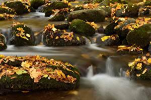 Обои Камень Осенние Мох Листва Ручей