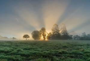 Фотографии Рассветы и закаты Луга Утро Туман Лучи света Траве Дерева Природа