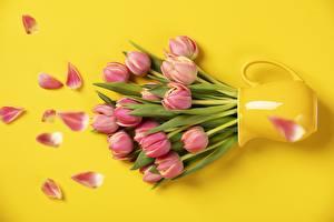 Картинка Тюльпаны Вазы Розовая Цветной фон цветок