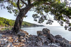 Картинка Турция Берег Камни Дерево HDRI Phaselis Природа