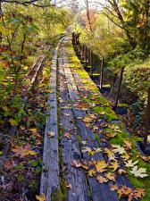 Обои Штаты Осенние Железные дороги Вашингтон Доски Листва Мха