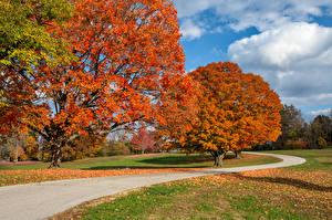 Фотографии США Парк Осенние Дороги Дерево Листья Arrow Rock State Park Missouri Природа