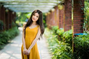 Фото Азиатки Боке Поза Платья Взгляд Шатенка молодая женщина