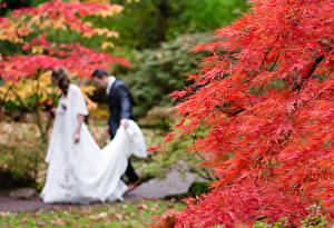 Обои для рабочего стола Осень Мужчины Размытый фон Двое Свадьба Жених Невеста Природа картинки