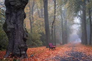 Фотографии Осень Парки Тумана Аллеи Листва