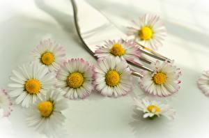 Картинка Маргаритка Размытый фон Вилка столовая Цветы