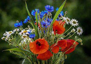 Фотография Букет Маки Васильки Ромашка цветок