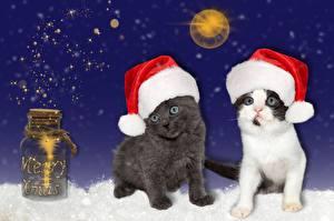 Картинки Новый год Кошки Банка Шапки Котята Животные
