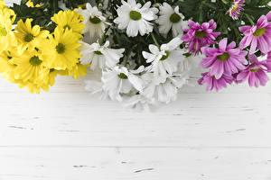 Фотографии Хризантемы Разноцветные Шаблон поздравительной открытки