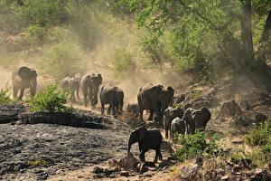 Фото Слоны Много