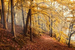 Картинка Леса Осень Лист Деревьев Природа