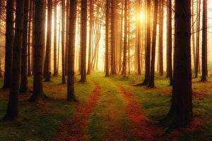 Картинки Лес Дороги Тумане Дерево Мха Природа