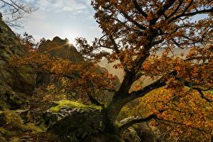 Обои Германия Осень Камни Деревья Мох Лучи света Hessen Природа картинки