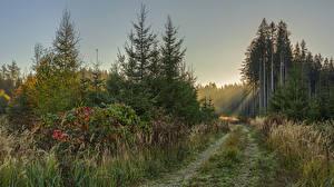 Картинки Германия Лес Бавария Тропы Ель Лучи света Траве Schönebach Природа
