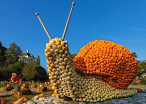 Фотографии Германия Тыква Улитки Дизайна Ludwigsburg Pumpkin Festival