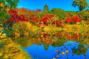 Картинка Япония Киото Парки Осенние Пруд HDRI Дерево Daikaku-ji Природа