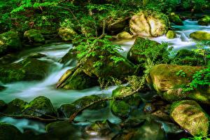 Обои Япония Камень Ручеек Мох Ветка Oirase Mountain Stream, Towada Природа