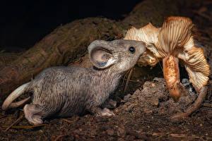 Картинки Грибы Мыши