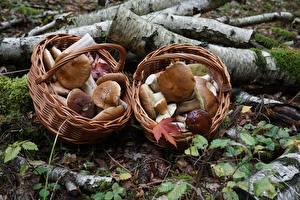 Фотографии Грибы природа Корзина penny bun Природа