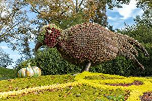 Обои Парки Птицы Осень Тыква Англия Дизайн Waddesdon Manor park Природа картинки
