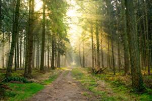 Картинка Дороги Лес Лучи света Дерева Природа