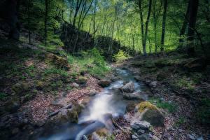 Обои для рабочего стола Камень Лес Армения Ручеек Мха Природа