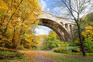 Фотография Штаты Парки Осень Мост Дерево Листья Wissahickon Valley Park Природа