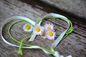 Картинка День всех влюблённых Маргаритка Ленточка Сердечко цветок