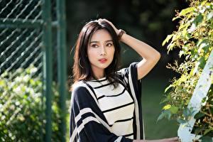 Фотографии Азиаты Поза Рука Шатенка Взгляд молодые женщины