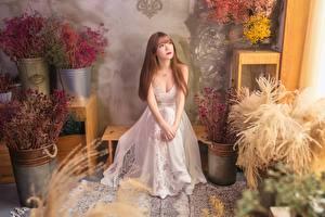 Картинки Азиаты Сидит Платье Шатенка молодые женщины
