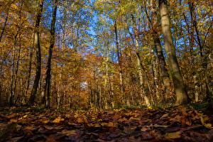 Фотография Осень Леса Деревья Листья Природа