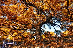 Обои Осенние Дерева Ветки HDR Природа