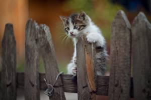 Картинки Коты Котята Забор Из дерева животное