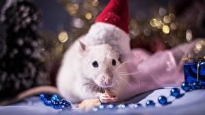 Картинки Новый год Крысы Шапки Животные